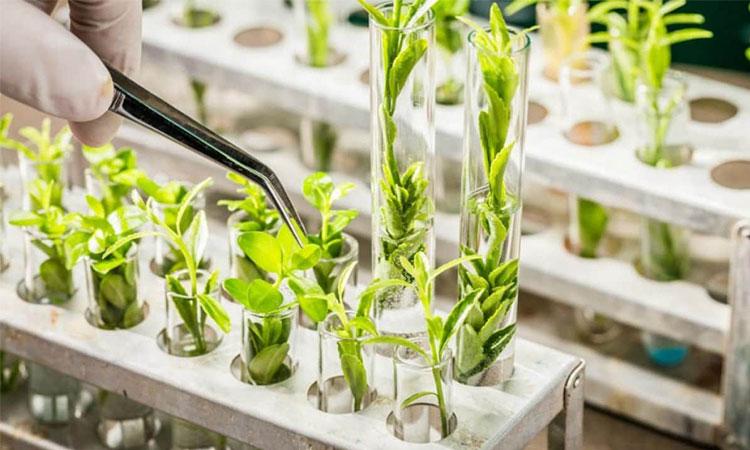 Công nghệ sinh học được ứng dụng trong nhiều lĩnh vực của đời sống